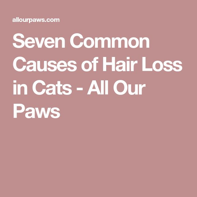 Seven Common Causes of Hair Loss in Cats - All Our Paws