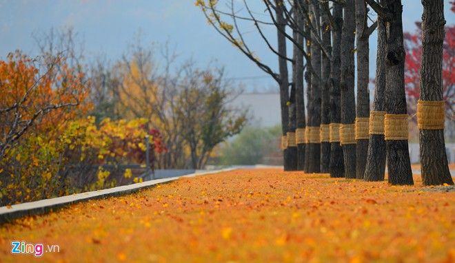 ở Hàn Quốc mùa thu những cảnh như này có rất nhiều
