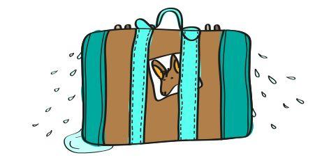 anglické frázy - potí sa ako somár v kufri
