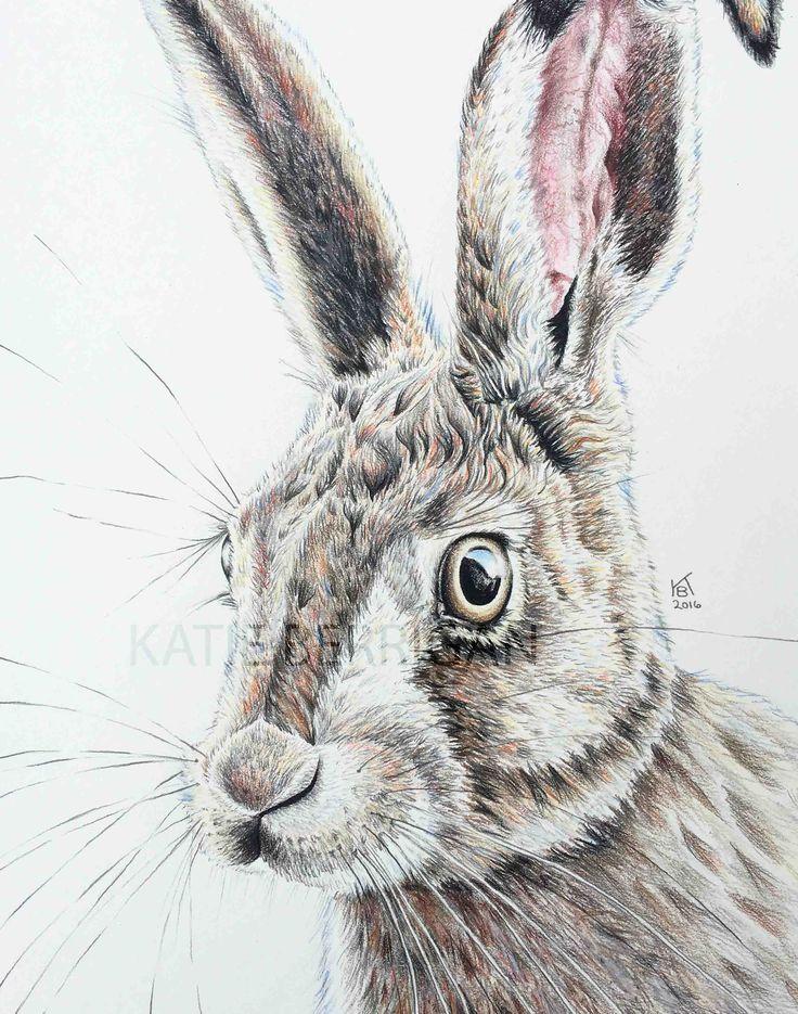 "Rabbit 8x10"" colored pencil drawing www.kberriganart.com ..."