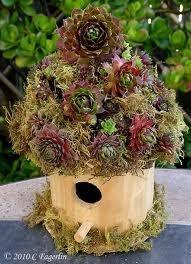 ;: Roof Birdhouses, Gardens Decor, Round Birdhouses, Birdhouses Gardens, Birds Houses, Living Birdhouses, 021010Birdhouse2 Jpg 507 700, Saturday Night, Succulents Roof