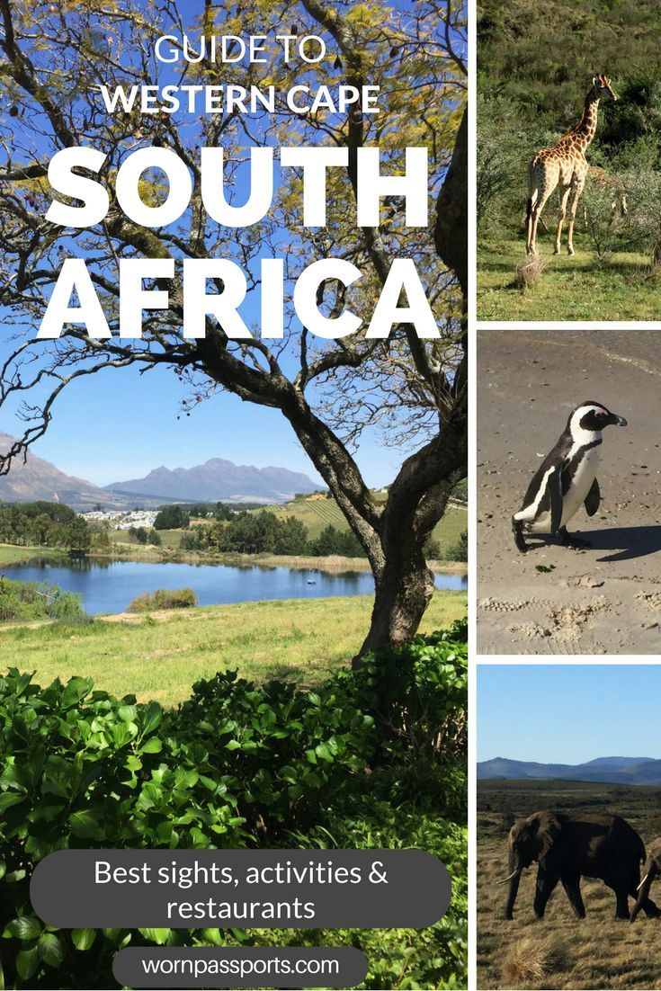 Travel guide to South Africa: Sample itinerary, advice, and recommendations from real travelers. Visit Stellenbosch, Cape Town, Cape of Good Hope, Gondwana Game Reserve, Knysna, Hermanus, & local restaurants like a pro.