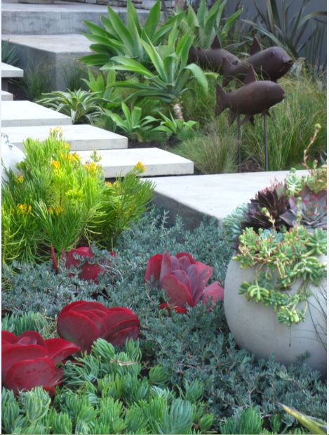 Floating pavers, create different garden rooms. Contrasting color, water wise succulent, create  wonderful colour combinations