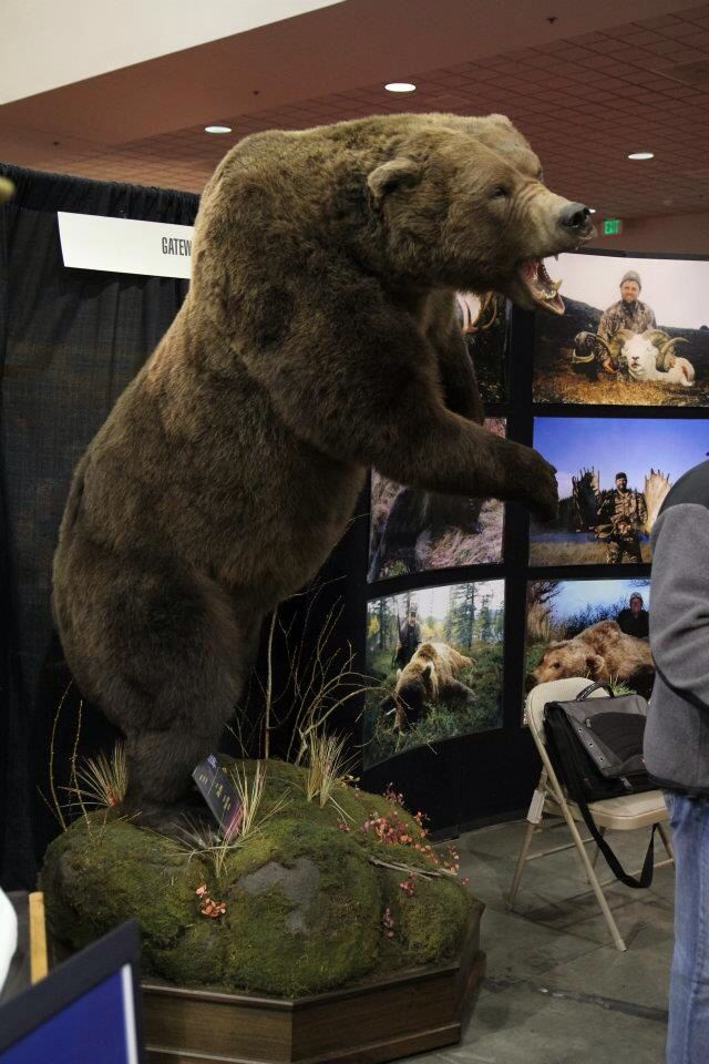 1000 Images About Mounts An Taxidermy On Pinterest Wall
