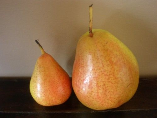Pears gives ten benefits of containing vitamins and other nutrients which make the body always healthy