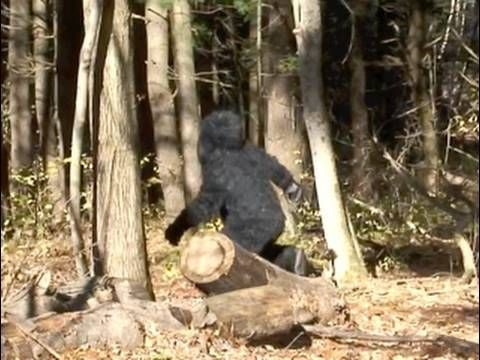 New York State Bigfoot video .