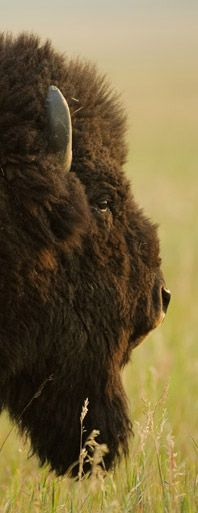 ••••Jackson Hole Wildlife Film Festival••••