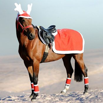 17 best images about christmas costume on pinterest merry christmas donkeys and remember day. Black Bedroom Furniture Sets. Home Design Ideas
