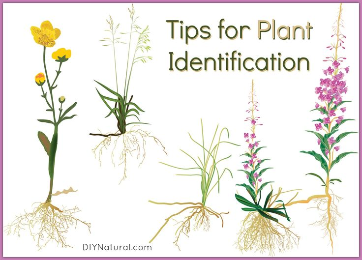 These plant identification tips will help improve your ability to recognize unfamiliar plants. A good guidebook is key, along with a journal, a camera, and more.
