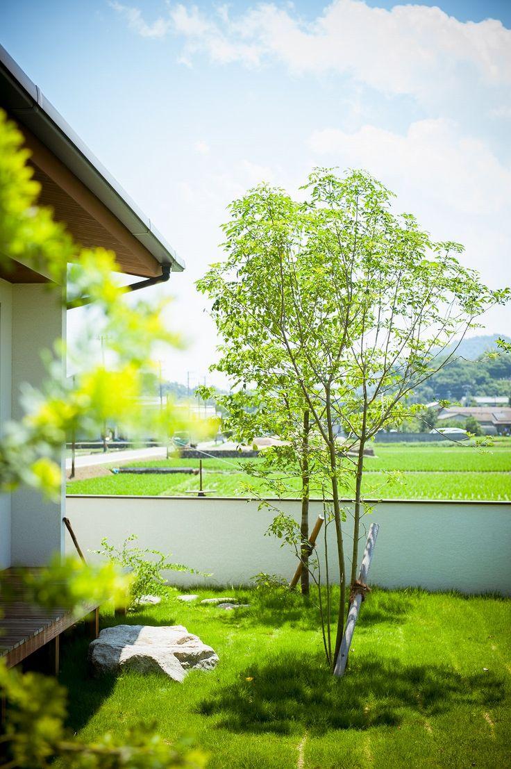 芝生の庭にあこがれます。手入れ(芝刈り)との葛藤。。。楽な手入れを色々考えますが、なかなか難しい。でも、それに勝る暮らし方ができます!芝生庭応援します!#芝生#庭#芝刈り#手入れ#植栽#作庭#塗壁#板貼り#踏み石#設計事務所#設計士と作る#デザイナーズ住宅#デザイン住宅#コラボハウス#香川#愛媛