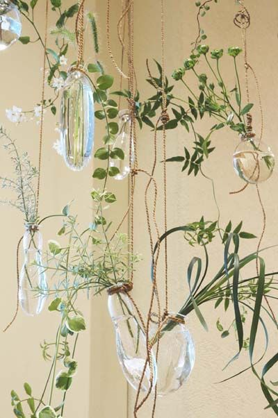 Plants in vases. Organizing with purpose or at least visual purpose. :)