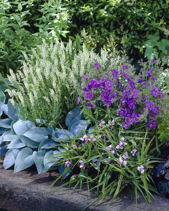 Unser Vorschlag für den halbschattigen Sommergarten mit Hosta, Geranien und schönen Gräsern.
