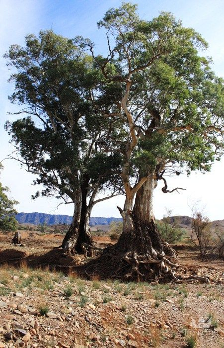 Moralana Scenic drive Flinders