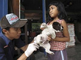 A resident brings a pet dog to be vaccinated by Dr. Rico Azrenra, a veterinarian at the nonprofit Bali Animal Welfare Association in Kebon Kaja village, Bangli Regency in Bali, Indonesia, in 2010. (AP Photo/Margie Mason)