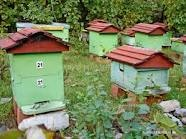 Sometimes Hives Have Color Graphics That Bees Learn So Individual Just Use One Hive Instead Of At Random