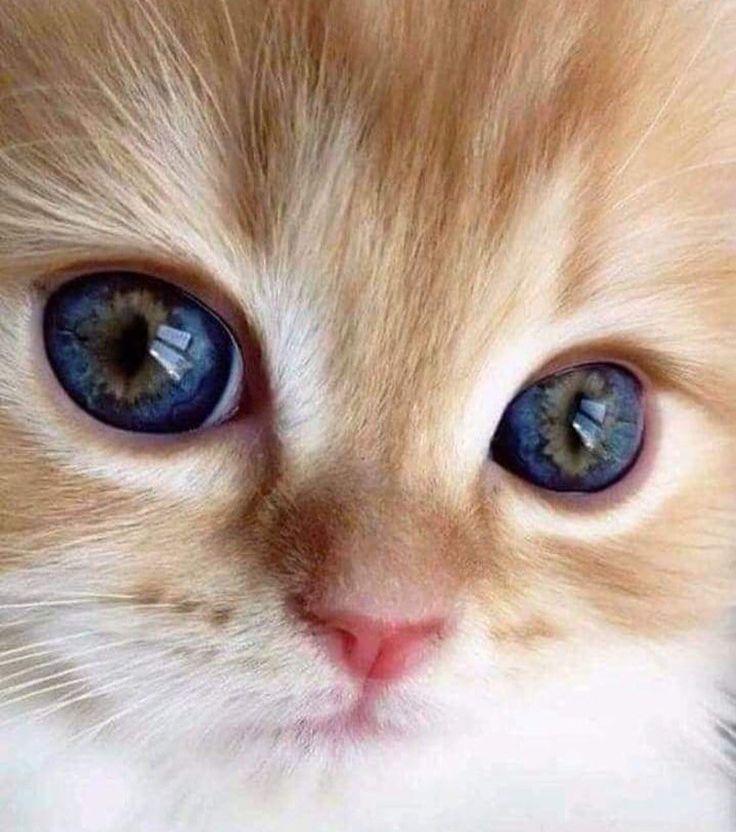 самые милые глаза картинки таком разе пригодится
