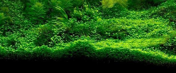 The best aquarium plants