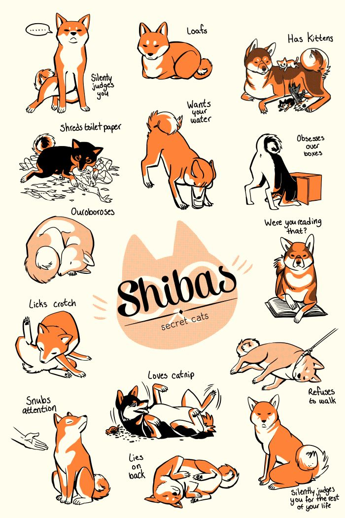 ghostdeer: Shibas: secret cats Here's the other screen print collab I recently did, this time with Nina Matsumoto. Who doesn't like Shiba Inus? ⇢ CLICK HERE TO PURCHASE ⇠ p.s. if you want to order both a Shiba and a Bone Bestiary print and not get charged for shipping twice, email me at brittch[at]gmail.com.