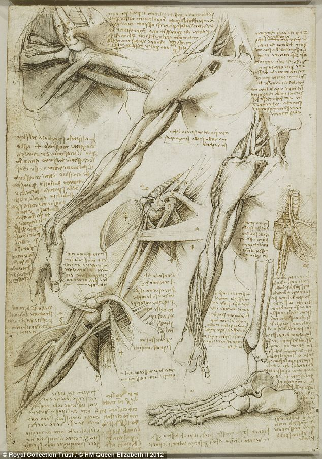 The muscles of the shoulder, arm and the bones of the foot, c.1510-11: A 3D film of a dissected shoulder will show the incredible accuracy of the many drawings of the bones, muscles, nerves and tendons of the joint