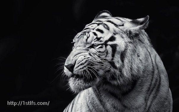 Нет зверя настолько дикого, чтобы он не отзывался на ласку.  © Эразм Роттердамский.