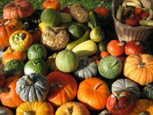 La grande famille des courges : intérêt nutritionnel et thérapeutique