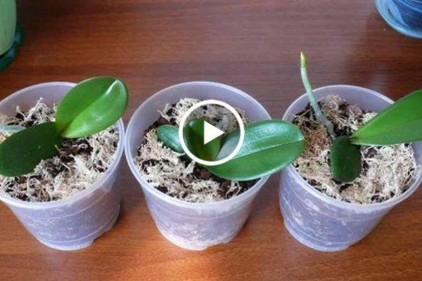 У вас есть одна орхидея. А хотите, чтобы их было 100? – БУДЬ В ТЕМЕ