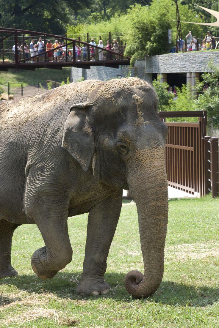 Tour of National Zoou0027s Elephant Barn