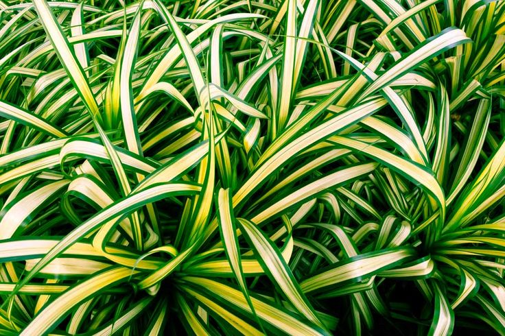NASA studied houseplants as a way to purify the air in space facilities, here are the plants that improve your indoor air quality best.
