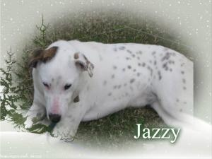 Jazzy is an #adoptable Dalmatian Dog in #Crowley, #LOUISIANA. Jazzy - beautiful sweet girl She is a dalmation mix Everyone deserves a second chance. Please give me mine....