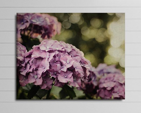 This gallery wrapped canvas features a close up of purple hydrangea flowers with green bokeh background. To view PRICING select SIZE using