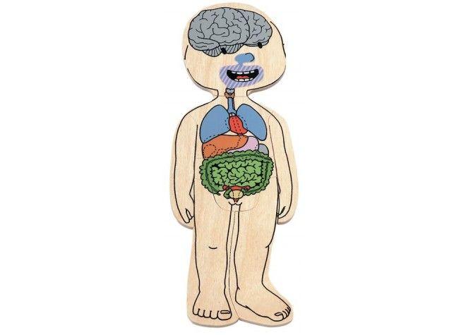 Lagen-Puzzle Dein Körper Mädchen, ab 4 Jahre von beleduc | SpielundLern