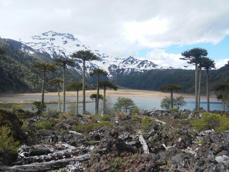 Laguna Blanca, Araucania, Chile