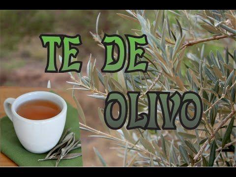 TE DE OLIVO. REMEDIO CONTRA LA HIPERTENSIÓN, COLESTEROL, ETC..