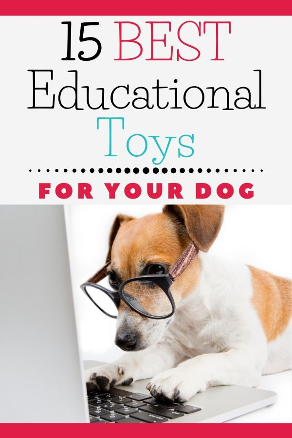 15 Affordable Stem Holiday Gifts For Every Dog Dachshund Station Dog Toys For Boredom Best Dog Toys Best Educational Toys