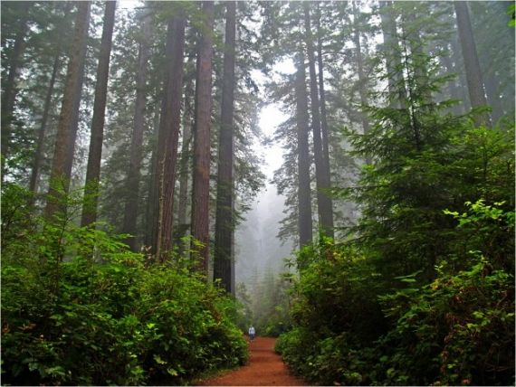 Redwood National and State Parks | redwood-national-and-state-parks-1024.jpg