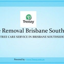 24*7 Emergency Tree Removal Brisbane Southside By Treezy Pty Ltd. Treezy Tree Removal Brisbane Southside is a reliable and well-respected local business used up and down the Brisbane Southside, delivering a complete tree removal service from lopping and pruning to tree surgery. Call now to Get Quotes 07 3999 9851 visit us on http://www.treezy.com.au - See more at: http://visual.ly/247-emergency-tree-removal-services-brisbane-southside#sthash.IAXGp4iK.dpuf  #tree #treeremoval #emergency…