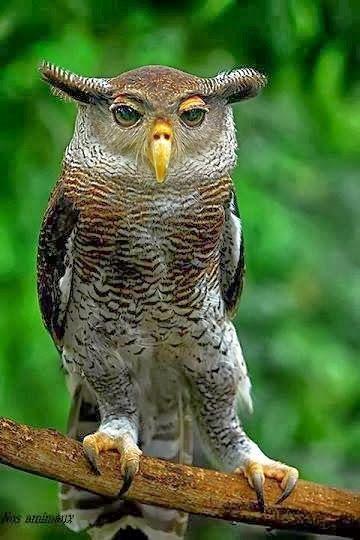 Amazing Owl by Vera Miteva. Google+