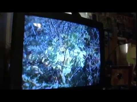 Not Your Typical Bigfoot Movie ( 2008 )