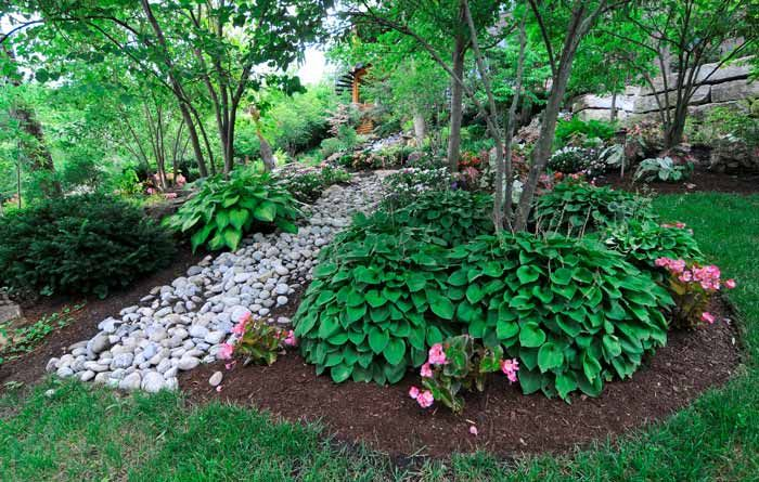 Dry river bed and pretty hostas with a few trees inviting for Dry landscape design