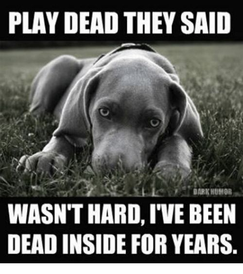 Best Funny Images On Pinterest Beautiful Life Dark And - 29 cutest dog photos existence