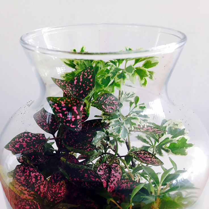 1000 Images About Greenhouses Amp Terrariums On Pinterest