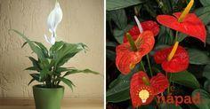 Položte ich do bytu a nechajte robiť svoju prácu: 15 izbových rastlín, ktoré NIE sú len okrasou interiéru!