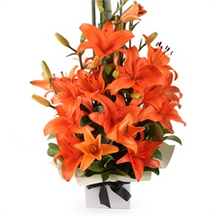 Warm Sunrise - A vibrant boxed arrangement of orange Asiatic lilies complemented by the greenest of foliage.