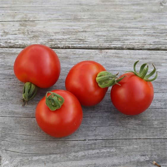 Les 25 meilleures id es concernant tomate vari t sur pinterest vari t de courgette vari t - Tomate est un fruit ...
