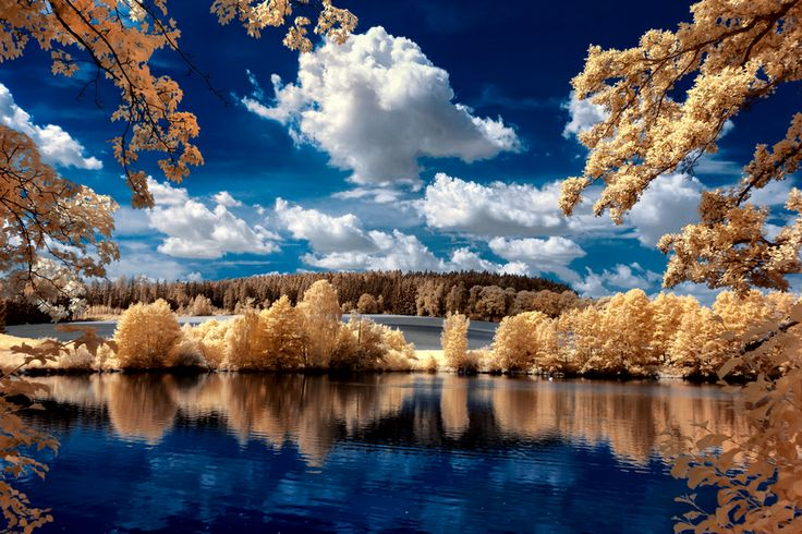 Infrared Photograph - Lime light trees by Thorsten Scheel, via 500px