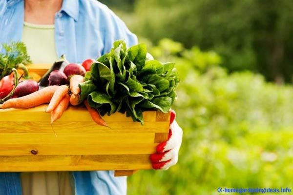 Suppose you have long wanted to know related to organic gardening, you are likely familiar time together in what way the things are being done in this process. But even so, you do not have to go to the outside of the tire to dig sciences for new things to help you along this business.