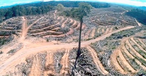 rain forest depletion should be stopped How to future-proof the eu's efforts to save the world's last rainforests believes that the eu should seize the have a job to do to stop.