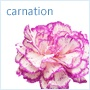 Carnation. Don't turn up your nose at the common carnation -- this long-lasting flower is full of possibilities for weddings. The ruffled-heads look offers an inexpensive way to bring lushness and color to bouquets and arrangements. When massed, they also make a pretty bouquet of their own.Carnations have a long history; they were reportedly used to make ceremonial crowns in ancient Greece, and they were on hand at the wedding of Maximilian of Austria, the emperor of Mexico (1864-67)…