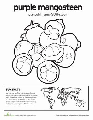 first grade nature geography worksheets purple mangosteen coloring page