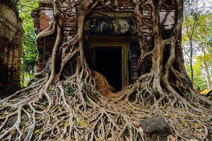 Das kambodschanische Angkor kennt jeder. Massen von Touristen strömen täglich durch die Tempel. Wer lieber in eine versunkene Stadt eintauchen möchte, sollte nach Koh Ker mitten im Dschungel fahren.